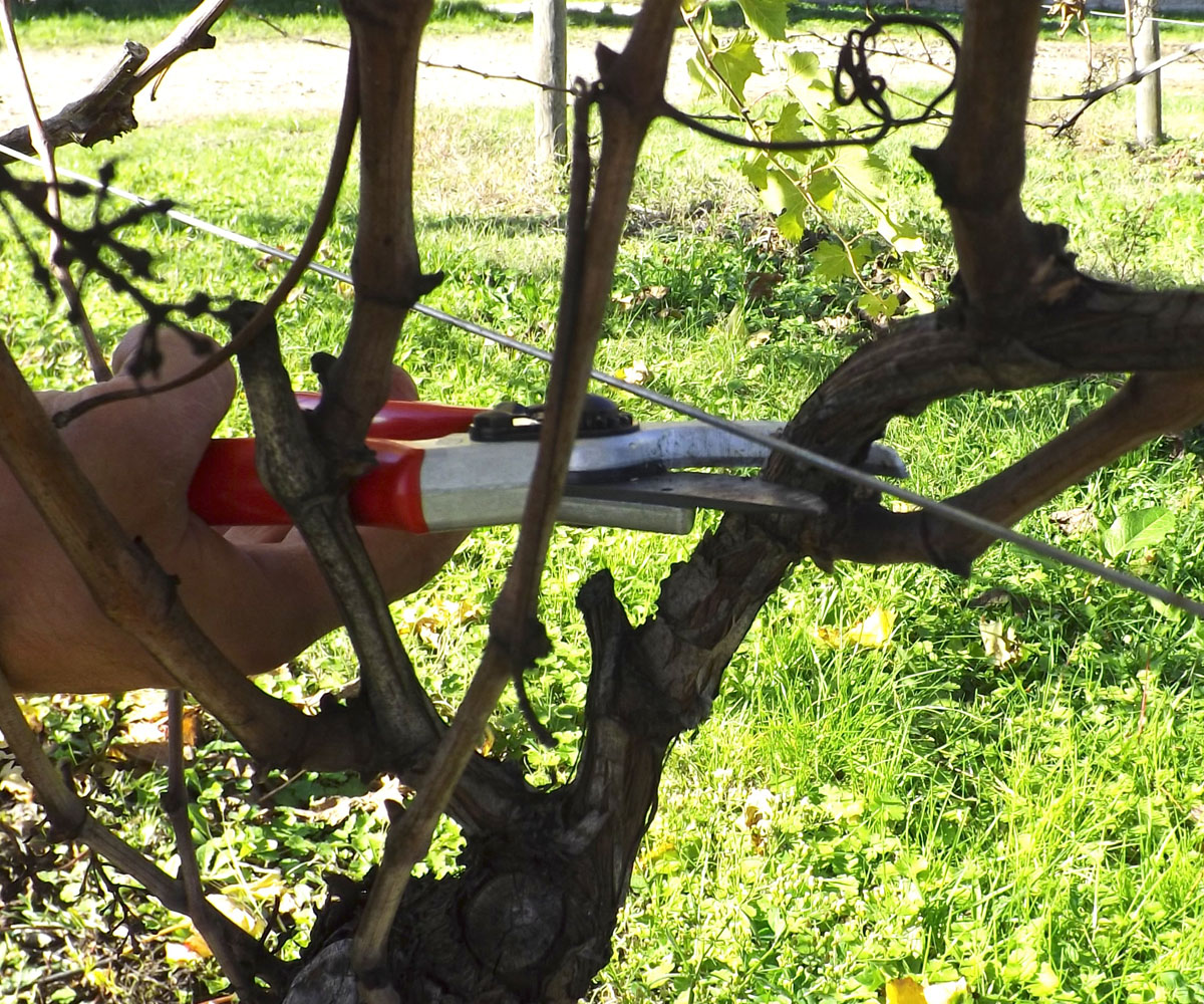 Qualche regola di base per la potatura di alberi da frutto for Quando piantare alberi da frutto