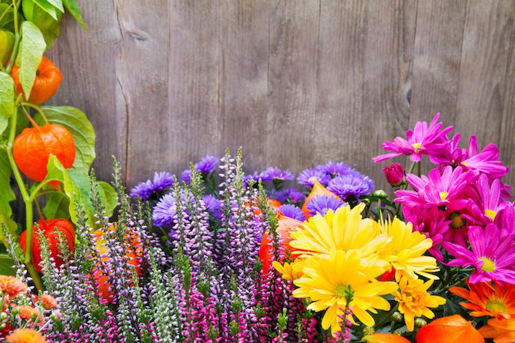 significati fiori